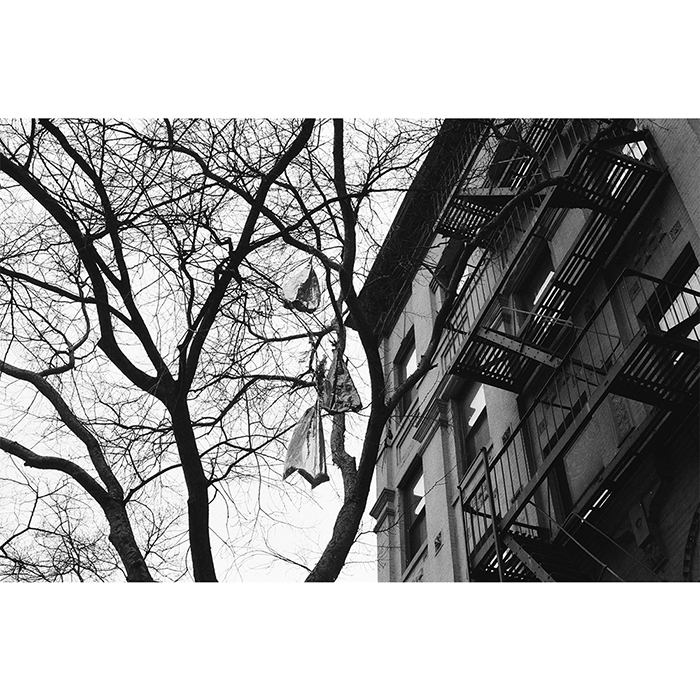 Photo ballons dans arbre NYC
